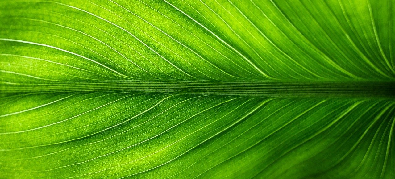 Close up of a leaf. Image by Jeon Sang-O from Pixabay