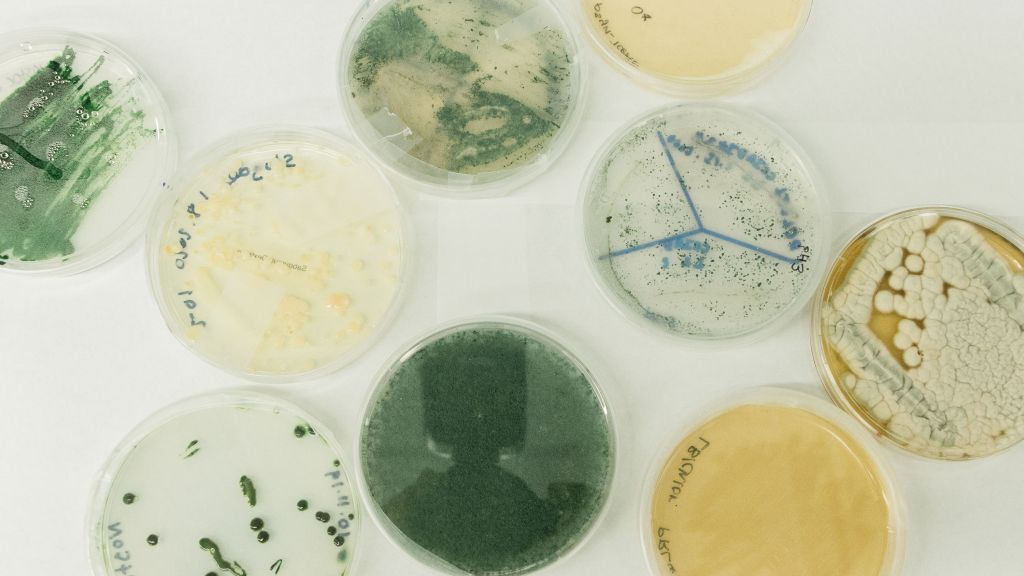 Microbe samples sit in petri dishes at a Cemvita laboratory. Image: Cemvita factory
